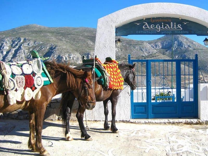 Donkey rides services